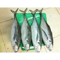 Wholesale 130-200g Frozen Mackerel Fish Products Supplied with Competitive Price. from china suppliers