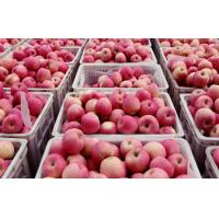 Wholesale Red and yellow skin Large Fuji Apple fragrant sweet, crisp and juicy from china suppliers