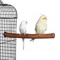 Quality Natural Old Vine Parrot Bird Perch for conures, cockatiels for sale