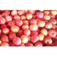 Wholesale Red Fresh Organic Fuji Apple from china suppliers