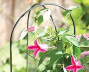 Wholesale Garden hoops plant support is perfect for twining-climbing plants from china suppliers
