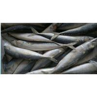 Wholesale frozen horse mackerel frozen mackerel whole round from china suppliers