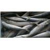 Buy cheap frozen horse mackerel frozen mackerel whole round from wholesalers