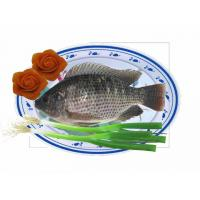 Wholesale High Quality Seafood Product Red and Black Frozen Tilapia from china suppliers