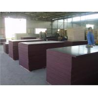 Buy cheap Brown film face and Back, poplar core, birch core, hardwood core,Size: 1220X2440X5MM-25MM. from wholesalers