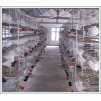Buy cheap Pigeon cages pigeon farming cages from wholesalers