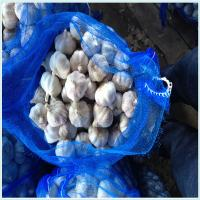 Wholesale professional Fresh garlic / Normal White Garlic / Pure White Garlic from china suppliers