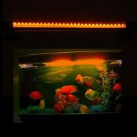 Wholesale Custom 7W Par38 AC85 - 264V 12000k LED Reef Aquarium Light bar  from china suppliers