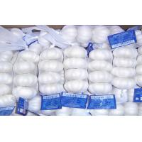 Wholesale Fresh Organic Garlic Bulbs Contains Sodium , Selenium For Coughs , Croup Treatment from china suppliers