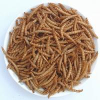 Wholesale Microwave dried mealworm-Fish food from china suppliers