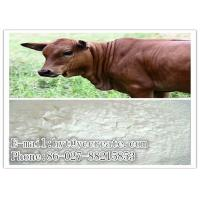 Wholesale Veterinary Medicine 98% Florfenicol Cattle Feed Supplements CAS 76639-94-6 from china suppliers