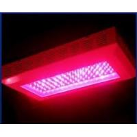 Wholesale Led indoor growing lights 150W AC85 - 264V hydroponics & horticulture & greenhouse from china suppliers