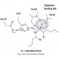 Buy cheap 9002-07-7 , Recombinant Trypsin / Amino Acid Sequence Is Identical To Porcine Pancreas-Deri from wholesalers
