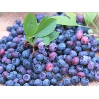 Wholesale Bilberry Extract from china suppliers