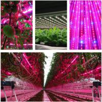 Wholesale T8 4 Feet Hydroponic Led Grow Lights For Vegetables / Flower , AC85-265V Input from china suppliers
