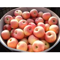 Wholesale Red Delicious Juice Fresh Fuji Apple With Yellowish / White Flesh from china suppliers