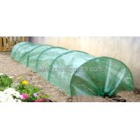 Wholesale Steel Tube Greenhouse-Tunnel Series-400X65X45CM-PE from china suppliers