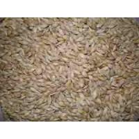 Wholesale Argentina barley from china suppliers