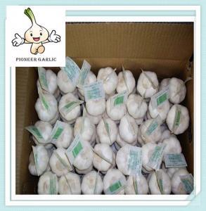 Wholesale Frozen China Garlic Natural garlic in fresh garlic for good health from china suppliers