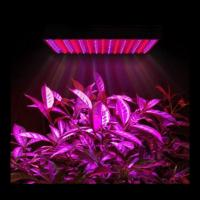 Wholesale Marijuana Full Spectrum LED Grow Lights Dimmable For Growing Plants Indoors from china suppliers