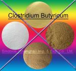Wholesale Brown 10BI CFU/G Clostridium Butyricum Feed Probiotics For Animals SEM-CB10BI from china suppliers