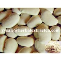 Wholesale White Kidney Bean Extract, 화이트 신장 콩 추출물, 3000 U/g, 중국 제조 업체, weight lose, Chinese manufacturer, Shaanxi Yongyuan Bio from china suppliers