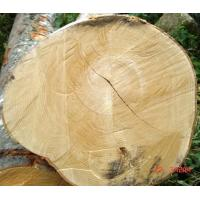 Wholesale Germany Imported Beech Logs( 德国进口新鲜榉木)Diam >50CM Length>8M from china suppliers