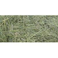 Buy cheap Alfalfa Cube from wholesalers