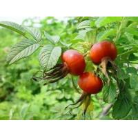 Wholesale Rose Hips Extract 100% natural Vitamin C, Vitamin E, Antioxidation, Skin repair function and Skin whitening from china suppliers