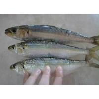 Wholesale New Arrive High Quality Whole Frozen Sardine For Market With 4-6pcs/kg Size. from china suppliers