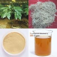 China Panax Ginseng Root Extract on sale