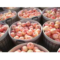 Wholesale Crisp Bright Red Fuji Apple Sweet / Delicious For Apple Juice from china suppliers
