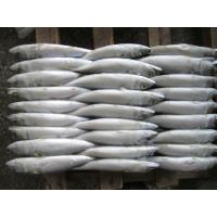 Wholesale New Season Frozen Whole Pacific Mackerel 300-500g from China. from china suppliers