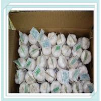 Wholesale 10kg / carton Chinese Pure white Fresh Garlic for world market from china suppliers