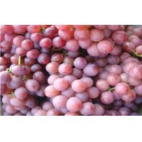 Wholesale Big Size Sweet Fresh Seedless Black / Red Globe Grapes Juicy from china suppliers