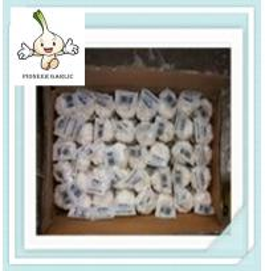 Wholesale Wholesale fresh shelf life garlic High Quality Fresh Organic White Garlic from china suppliers