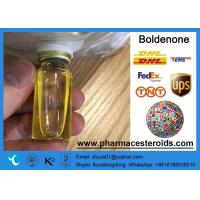 Wholesale Bodybuilding CAS 13103-34-9 Anabolic  Steroids Boldenone Undecylenate from china suppliers