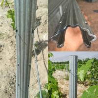 Wholesale 2.4m 2.5m Galvanised Steel Vineyard Posts Substitute Of Cement Posts And Wooden Posts from china suppliers