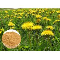 Wholesale Powerful Antioxidant Natural Dietary Supplements Brown Dandelion Root Extract Powder from china suppliers