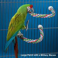 Wholesale Bendable Parrot Perch for Amazon,Cockatoo and other large parrots from china suppliers