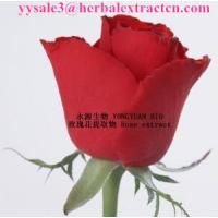 Wholesale Rose extract  delay aging and compact skin 10:1  Rose Polyphenol, cosmetic raw material, Shaanxi Yongyuan Bio-Tech from china suppliers
