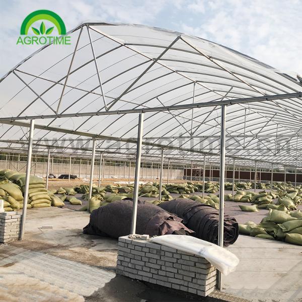 greenhouse 8 x 10.jpg