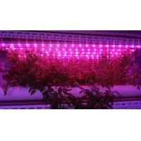 Wholesale Led Grow grow lights 0.6m length W-Full spectrum 4000K:660nm 3;1 T8 led growing light for hydroponics culture plant from china suppliers