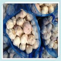Wholesale Fresh pure white normal white garlic 4cm 4.5cm 5cm up in carton or mesh bag from china suppliers