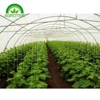 Wholesale Best Price Factory Direct sale 2019 single tunnel greenhouse with Film Cover and hydroponic growing systems from china suppliers