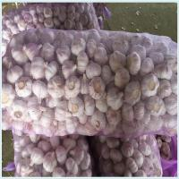 Wholesale white garlic in high quality purple garlic first quality clean from china suppliers