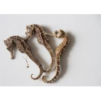 Buy cheap dry Sea Horse/ Hippocampus/Yang tonics/Traditional chinese medicine/Hai Ma from wholesalers