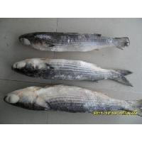 Wholesale Grey Mullet from china suppliers