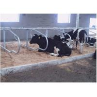 Wholesale Dairy Farm Double Row Type Cow Free Stall With 1.20m Cattle Spacing from china suppliers