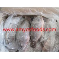 Wholesale High quality low price fozen tilapia GS processed from alive fish from china suppliers